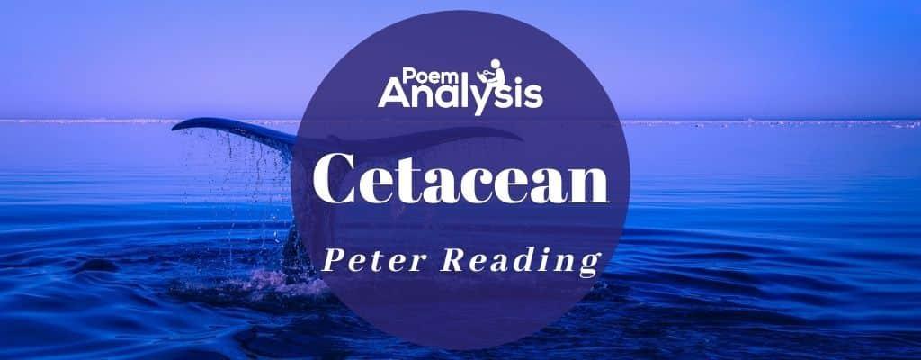 Cetacean by Peter Reading