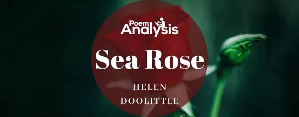Sea Rose by Helen Doolittle