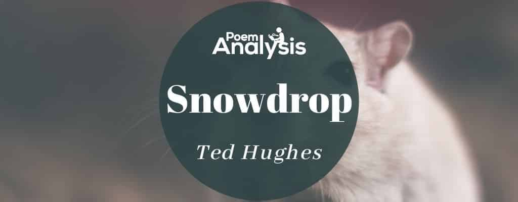 Snowdrop by Ted Hughes