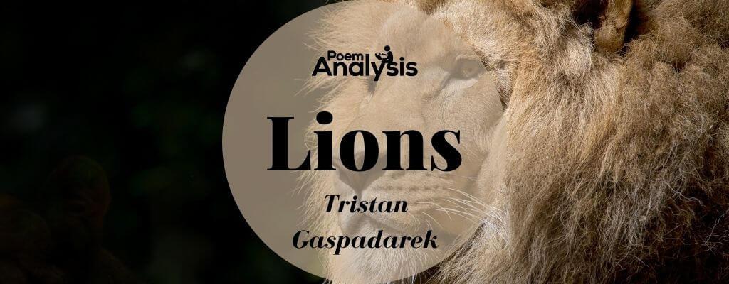 Lions by Tristan Gaspadarek