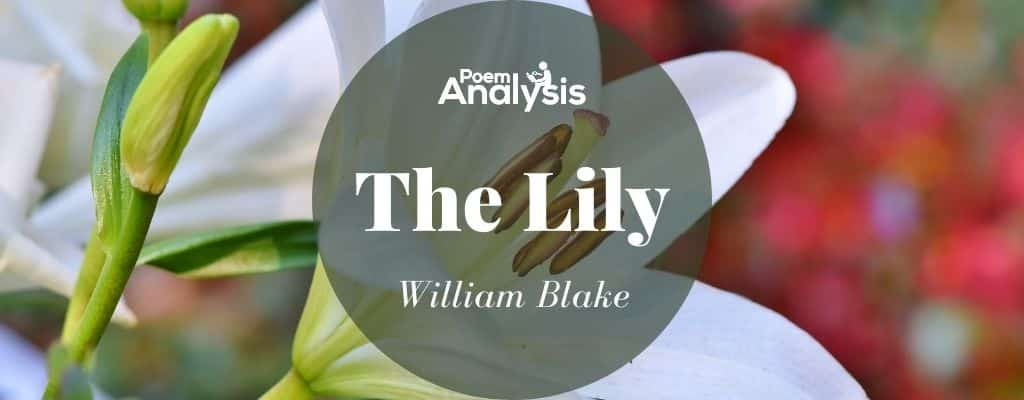 The Lily by William Blake