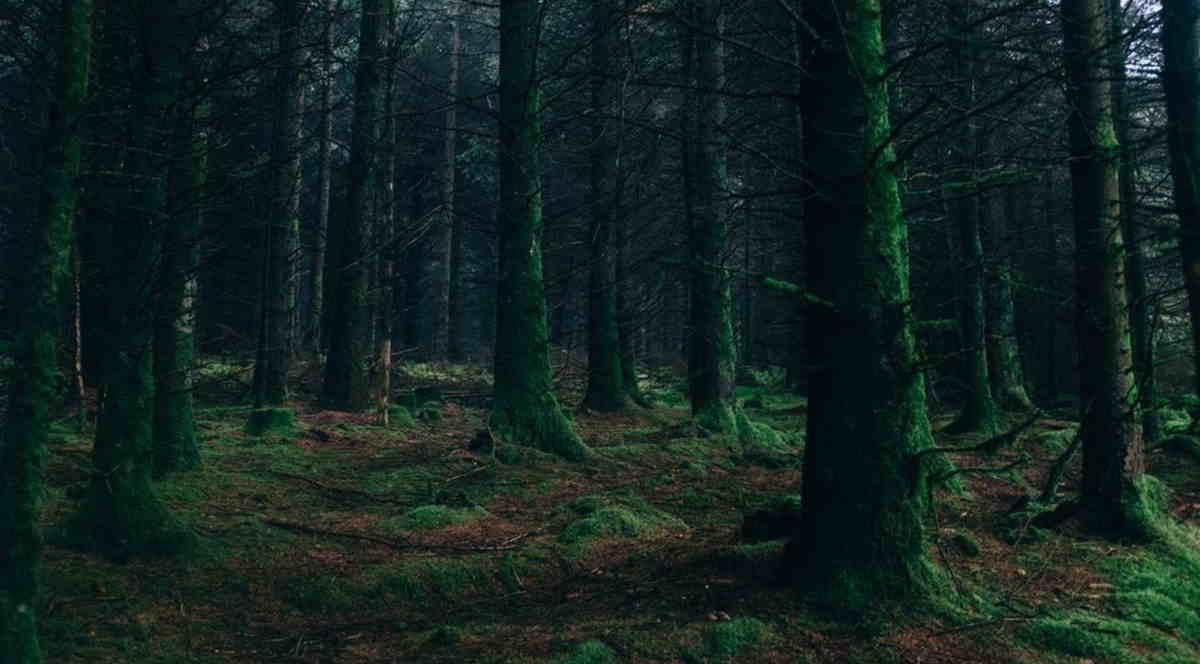 Gretel in Darkness