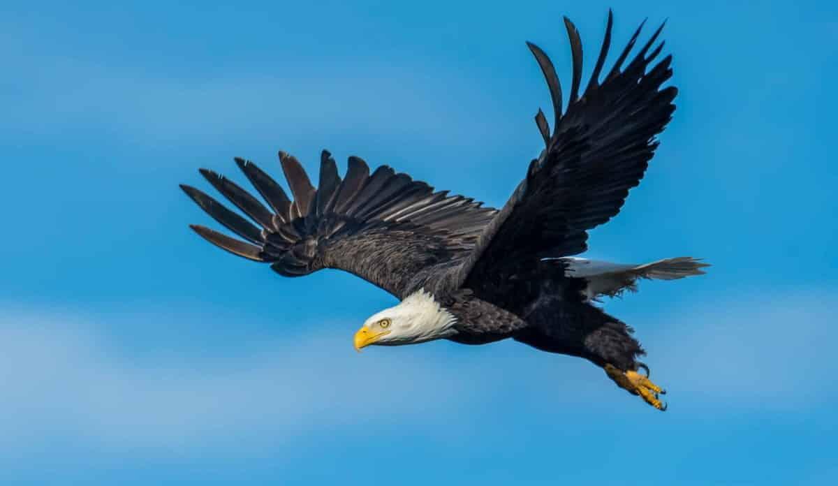 Eagle Poem by Joy Harjo Visual Representation