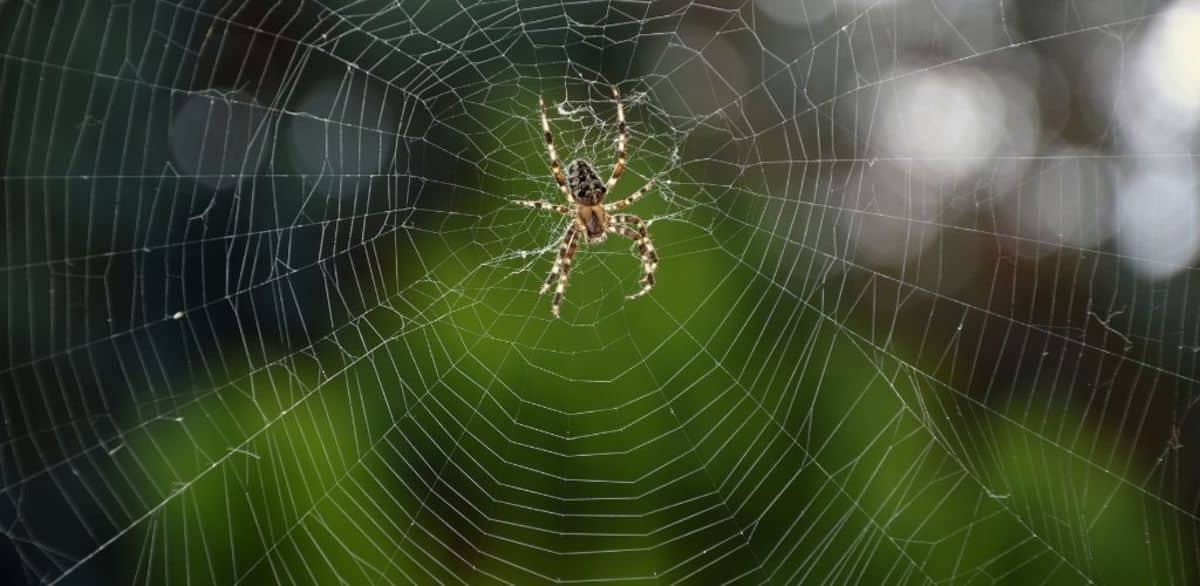 After killing a spider by Masaoka Shiki