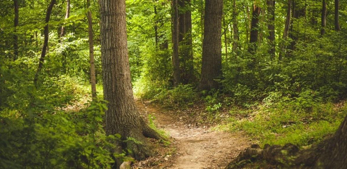 the forest path by lucy maud montgomery visual representation