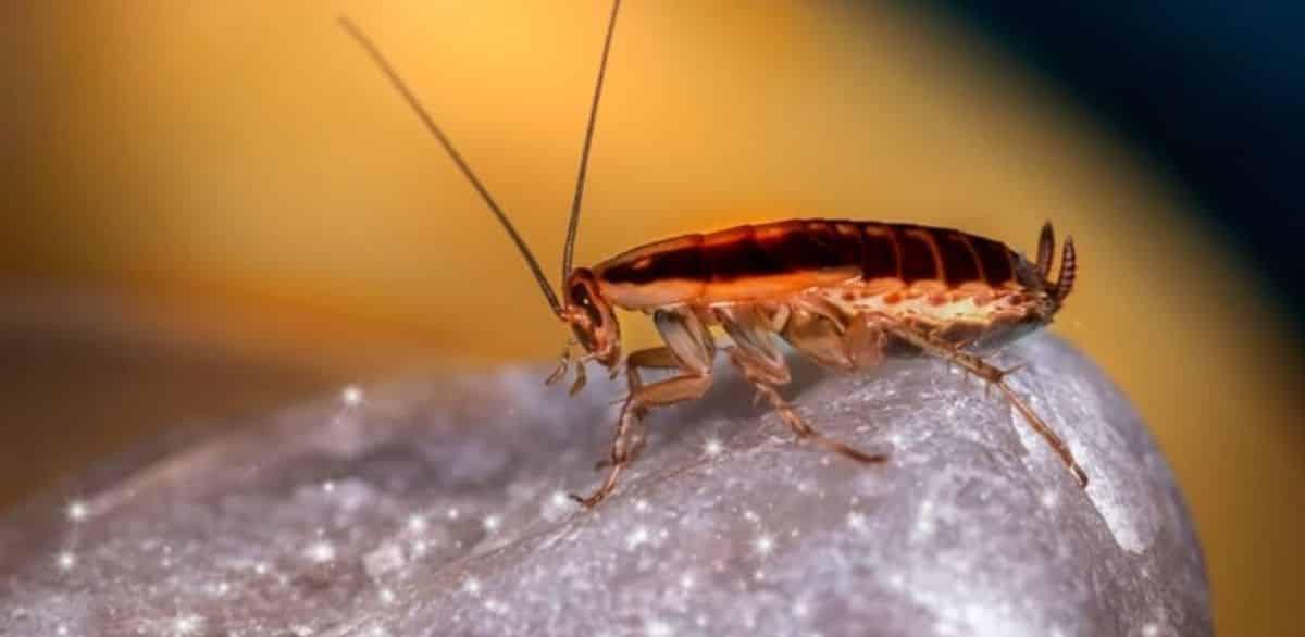 At Last We Killed the Roaches Visual Representation
