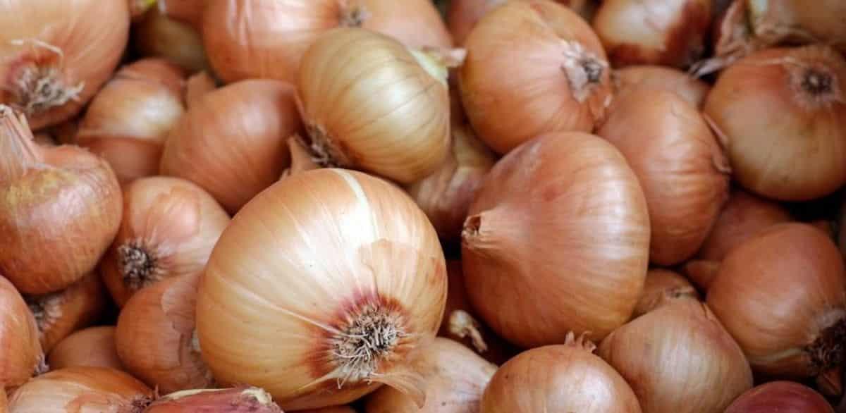 Monologue for an Onion by Suji Kwock Kim Visual Representation